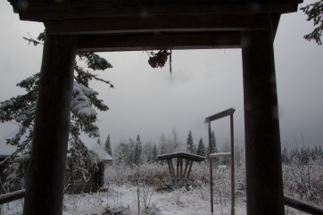 ITDDR behind the scenes / Day 1 - the edge of the ancient forest and our artist residency.